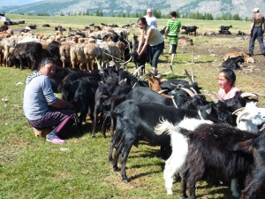 Nomad Herder