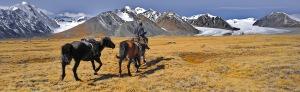 Kazakh Nomads in Mongolia 2